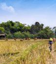 charmes-et-authenticite-du-nord-laos (3)